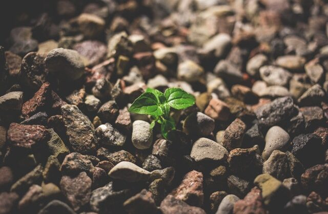 plant growing in rocks to show power of compounding or compound interest